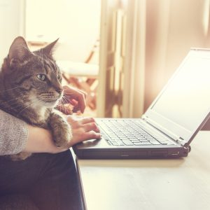 homescene: typing at modern notebook without logos but with beautiful cat